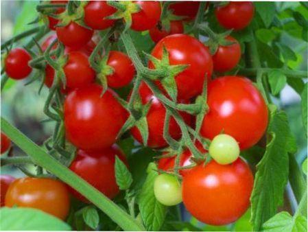 Томат Інтуїція: характеристик, опис сорту і врожайність