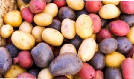 Як правильно зберігати картоплю взимку в домашніх умовах в коморі або підвалі