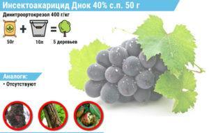 """Застосування препарату для винограду """"ДНОК"""""""