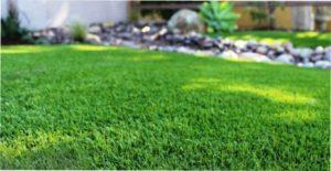 Коли та як удобрювати газон