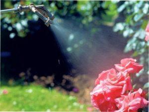 Чим обробляти троянди від хвороб