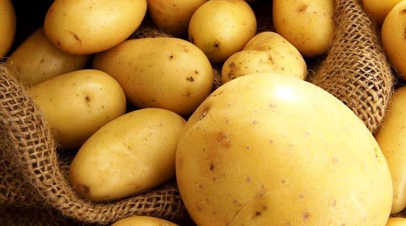 Правильне підживлення картоплі при посадці та під час зростання
