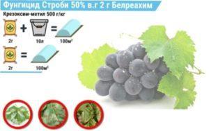 Застосування препарату «Строби» для виноградників
