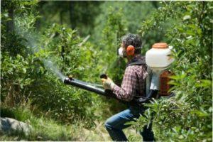Обприскування рослин препаратом «Строби»