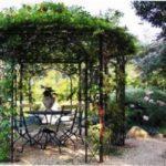 5 найкрасивіших витких рослин для прикраси альтанки на дачі опис з фто