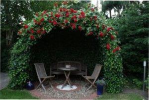 Альтанка з трояндами зображення