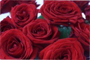 Троянда Red Naomi опис