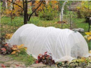 Підготовка кущів смородини до зими на вашій дачі