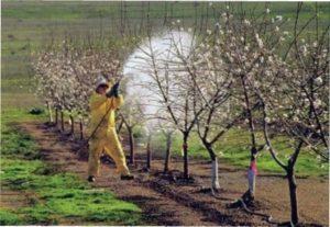 Полив яблунь фото