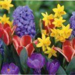 25 найкращіх цибулинних квітів для вирощування у вашому саду та будинку