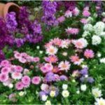 Місячний календар квітникаря на листопад 2021 року - коли пересаджувати рослини в листопаді