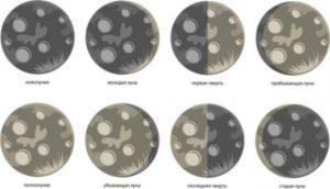 Особливості заготівлі сировини за місячним календарем