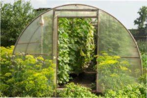 Способи вентеляції теплиці на городі