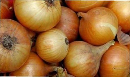 Ріпчаста цибуля: правильно збираємо врожай і готуємо до зберігання, настанови з фото
