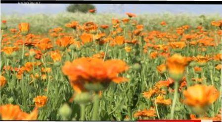 Як правильно збирати, сушити та зберігати лікарські трави та рослини