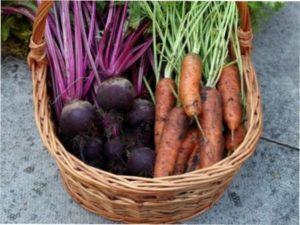Коли і як копати моркву і буряк для зберігання на зиму в домашніх умовах