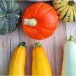 Як зберегти кабачки і гарбуз на зиму в домашніх умовах в льоху, погребі чи подвалі