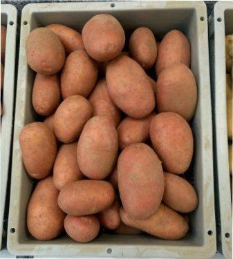 Як правильно відібрати, підготувати і зберігати насіннєву картоплю?