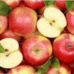 Як правильно збирати і зберігати врожай яблук на зиму в домашніх умовах
