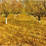 Осінні роботи в саду і городі - які види осінніх робіт здійснюють восени перед зимою