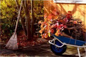 Осінні роботи в саду і городі фото