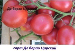 Де Барао Царський урожай томатів