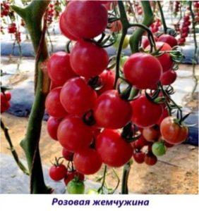 Рожева перлина томат