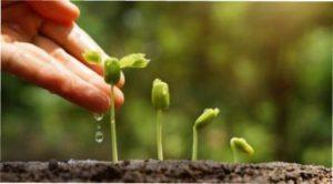 Як правильно поливати розсаду