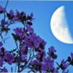 Місячний календар квітникаря на березень 2021 року - сприятливі дні для посадки