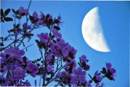 Місячний календар квітникаря на березень 2020 року — сприятливі дні для посадки