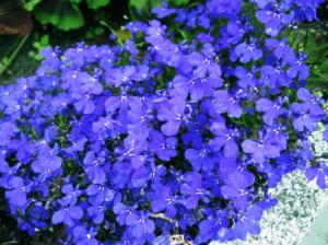 Які квіти садити в березні 2020 року - фото.