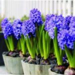 Які квіти сіяти на розсаду в березні 2021 року за місячним календарем садівника