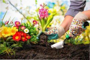 Які квіти сіяти на розсаду в березні 2020 року