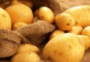 Коли викопувати картоплю на зберігання в 2020 році: сприятливі дні