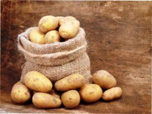 Коли викопувати картоплю на зберігання в 2020 році
