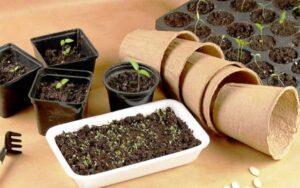 Сприятливі дні для посіву насіння в 2020 році