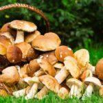 Календар грибника 2021 рік: коли збирати гриби, сприятливі дні