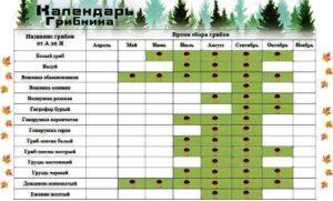 Календар появи грибів по місяцях