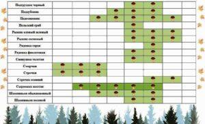 Календар появи грибів по місяцях - фото.