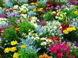 Що потрібно зробити в квітнику у вересні: роботи