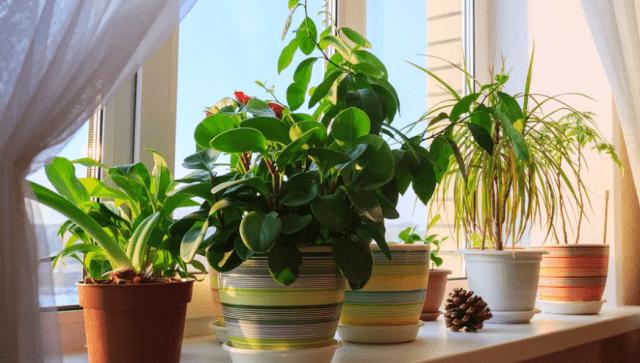 Як позбутися попелиці на кімнатних рослинах в домашніх умовах