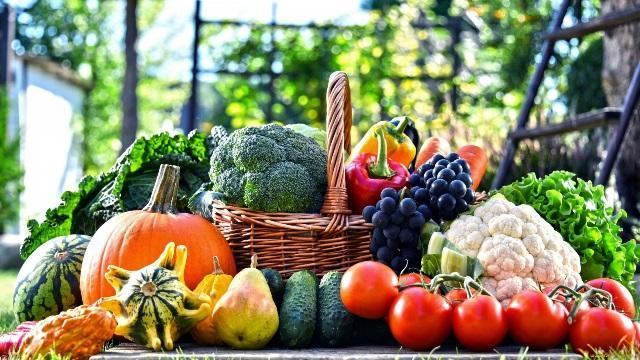 Роботи в саду і городі в серпні: що потрібно зробити, календар