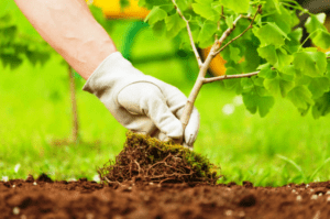 Підготовка до посадки дерев і чагарників - фото.