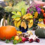 Місячний календар садівника і городника на листопад 2020 року (таблиця)