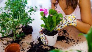 Які роботи виконують в саду і городі в грудні