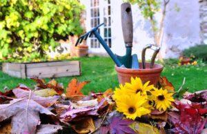 Календар садівника на кожен день листопада 2020 року