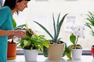 Місячний календар на листопад 2020 року для догляду за домашніми квітами