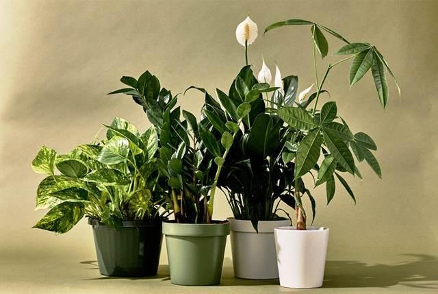 Місячний календар кімнатних рослин на листопад 2020 року