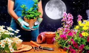 Пересадка квітів за місячним календарем листопад
