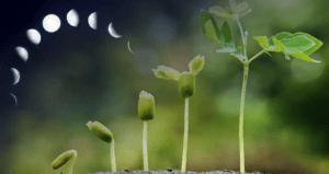 Коли садити розсаду в 2021 році за місячним календарем